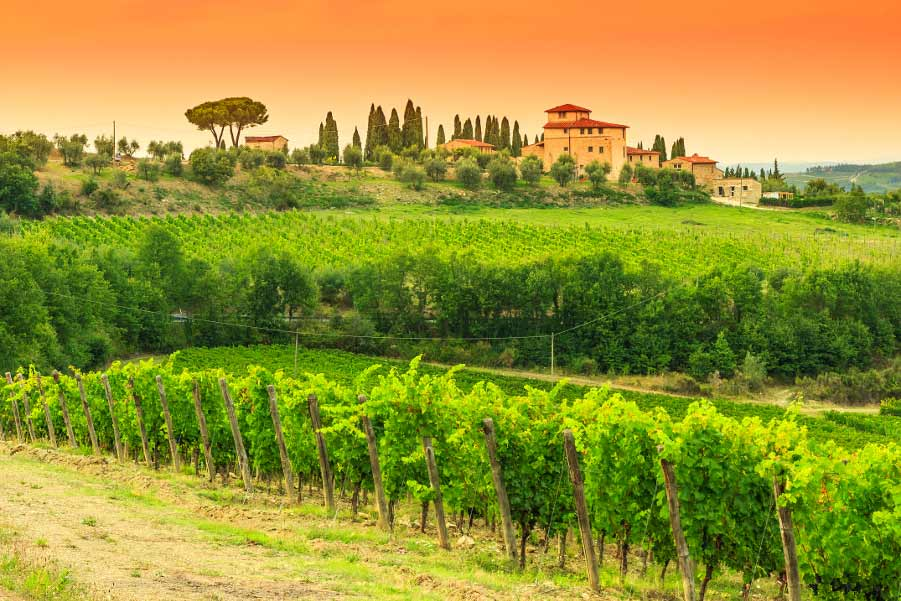 Florence Transfer with Sightseeing Option A: Chianti Sightseeing
